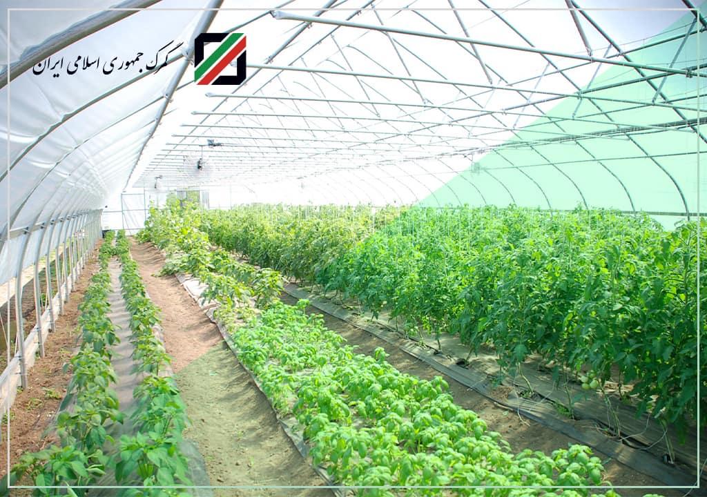 محصولات غذایی تولید شده در مناطق آزاد نیاز به مجوز ندارند